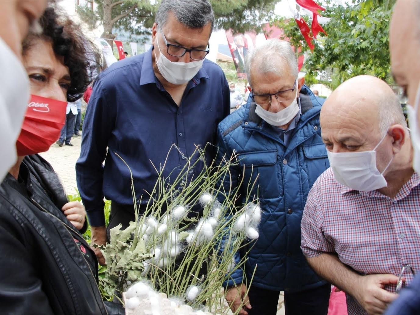 Ödemiş'in ipekböcekçiliği projesinde hasat zamanı
