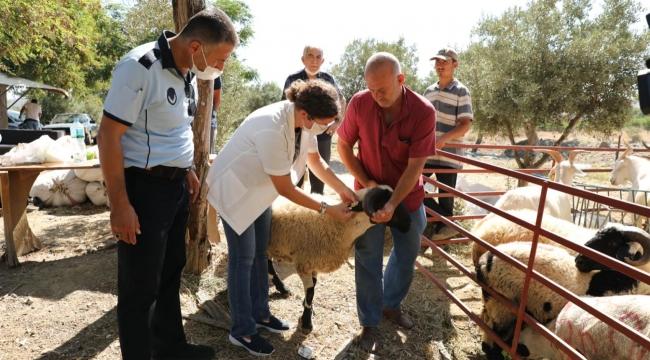 Seferihisar'da Kurbanlık Hayvan Pazarları her gün denetleniyor