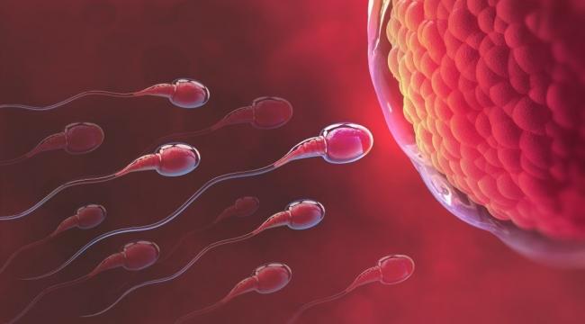 Uzmanından sperm sayısını artıran 8 önemli besin